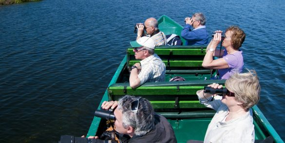 birdwatching from boat
