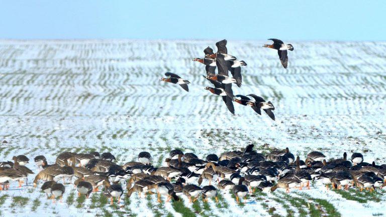 winter birding tour