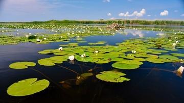 Springtime in Danube Delta